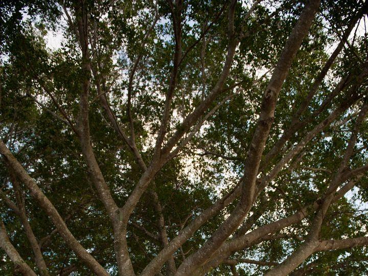 Tmx 1482524383304 103318070134ef3af242fo Fort Lauderdale, FL wedding venue