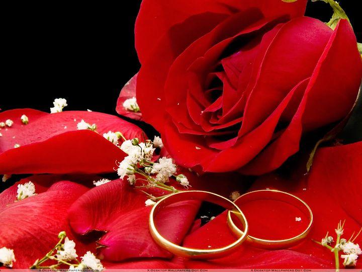 Tmx Holidays Weddings Red Rose And Wedding Rings On A Black Background 057067  51 1904147 157894737568203 North Port, FL wedding dj