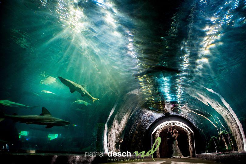 adventure aquarium wedding 1 of 1 3