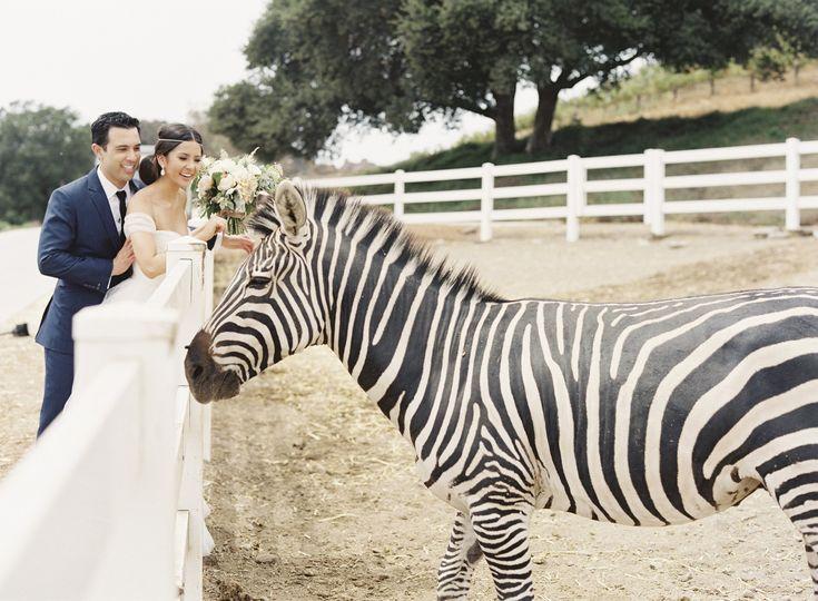 Couple with the zebra