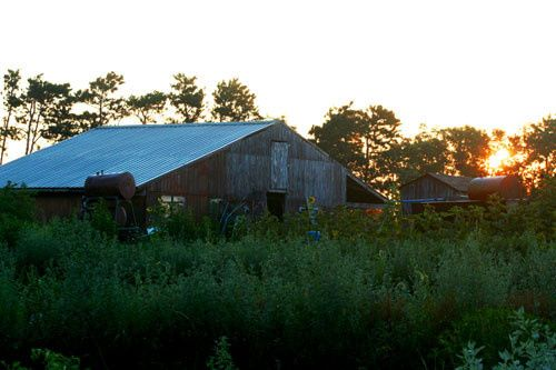 Sunset view of the barn near the organic gardens.