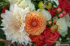 Plumeria Botanical Boutique