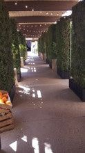 Tmx 1431712478459 Entrance With Plants And Lights Montclair wedding rental