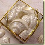 wedding shell favors clear box