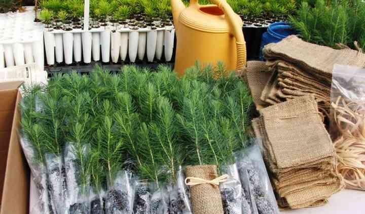 Redrock Evergreen Seedling Nursery and Christmas Tree Farm