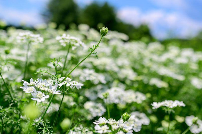 Organic farmed flowers