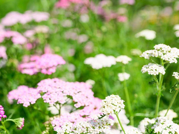 Tmx Erf 17 2 51 1899057 157499174174199 Gardiner, ME wedding florist
