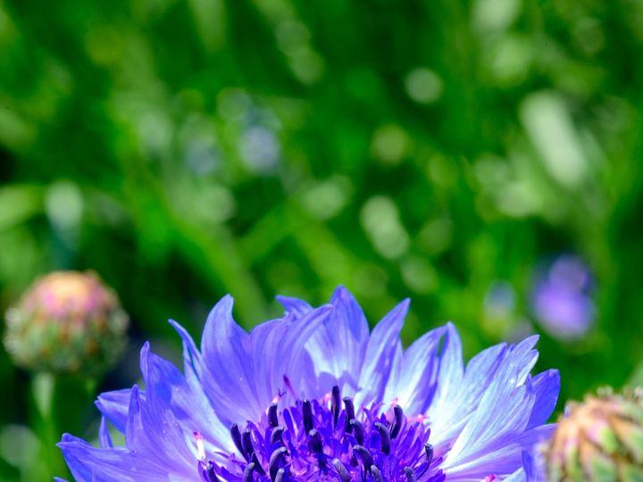 Tmx Flower Bloom 20 51 1899057 157499173210766 Gardiner, ME wedding florist