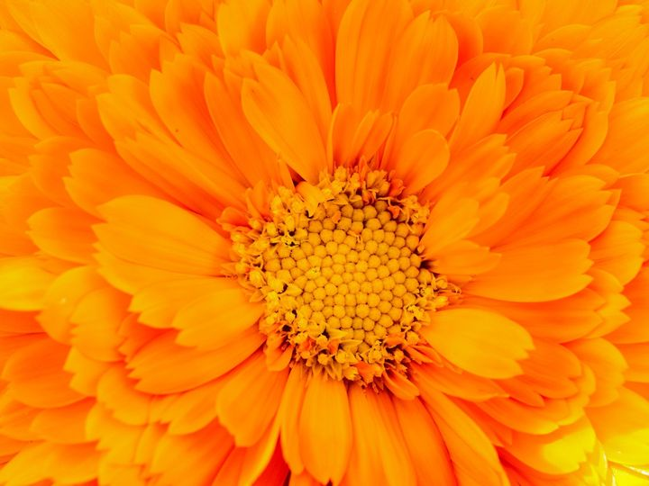 Tmx Flower Bloom 2 51 1899057 157499174921833 Gardiner, ME wedding florist