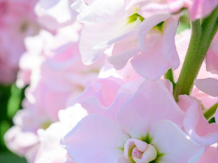 Tmx Flower Bloom 41 51 1899057 157499175142717 Gardiner, ME wedding florist