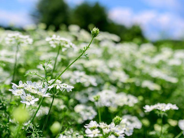 Tmx Flower Bloom 81 51 1899057 157499174820662 Gardiner, ME wedding florist