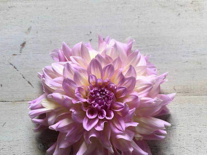 Tmx Img 1119 51 1899057 157499171065623 Gardiner, ME wedding florist