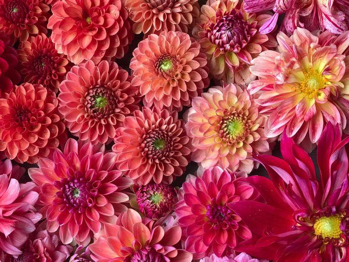 Tmx Img 1821 51 1899057 157499169770246 Gardiner, ME wedding florist