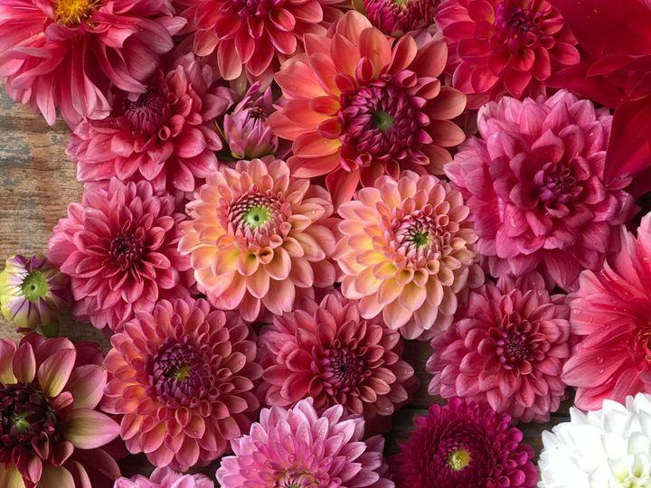Tmx Img 1822 51 1899057 157499169760989 Gardiner, ME wedding florist
