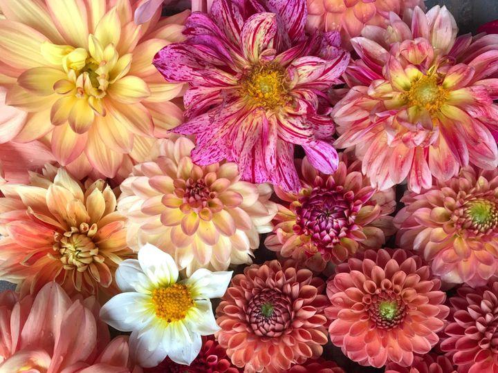 Tmx Img 1836 51 1899057 157499169429369 Gardiner, ME wedding florist