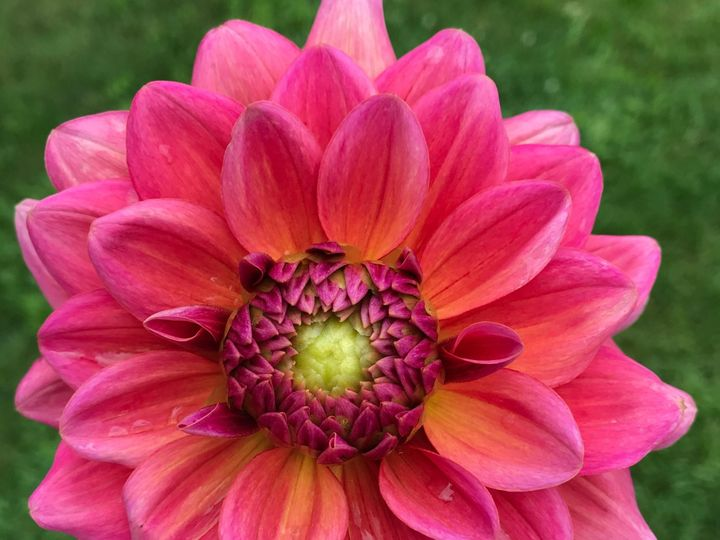 Tmx Img 9848 51 1899057 157499172983824 Gardiner, ME wedding florist