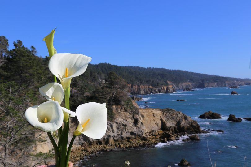Ocean lilies