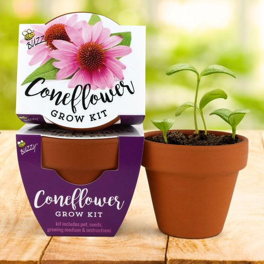 Terra Cotta Mini - Coneflower