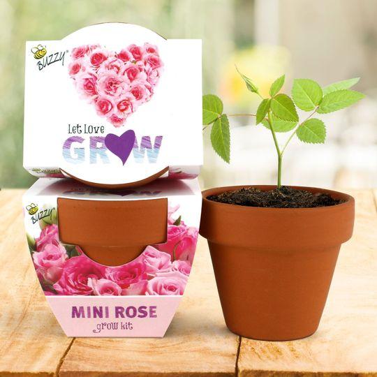 Terra Cotta Mini - Mini Rose