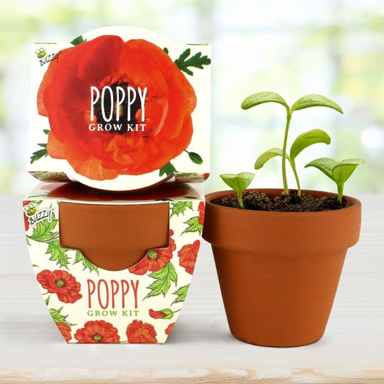 Terra Cotta Mini - Poppy