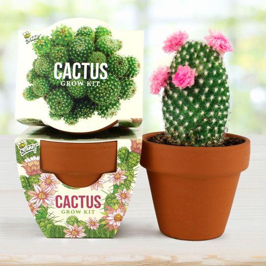 Terra Cotta Mini - Cactus