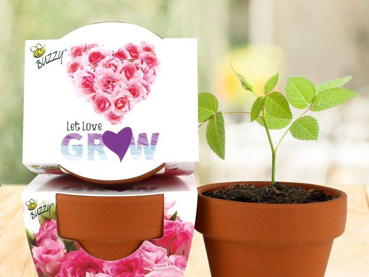 Tmx 80823 Mgp Mini Rose Image3 51 1474357 1566230071 Pottsville, PA wedding favor