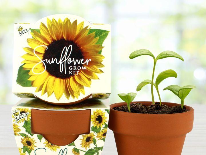 Tmx 80877 Mgp Daydream Sunflower Image3 51 1474357 1566230074 Pottsville, PA wedding favor
