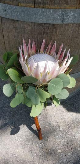 Bridal bouquet, simple and unique, blush pink proteus with eucalyptus