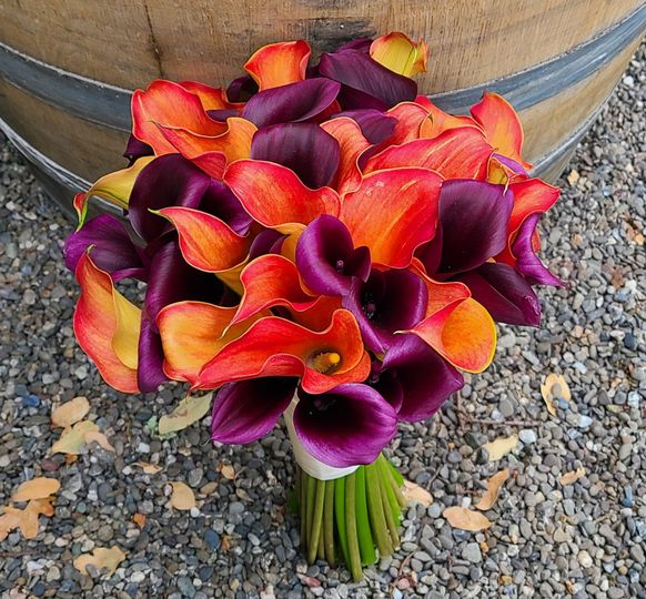 Jewel tone, mango purple calla