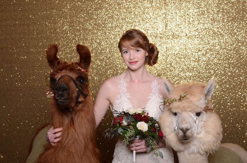 We can fit wedding llamas!
