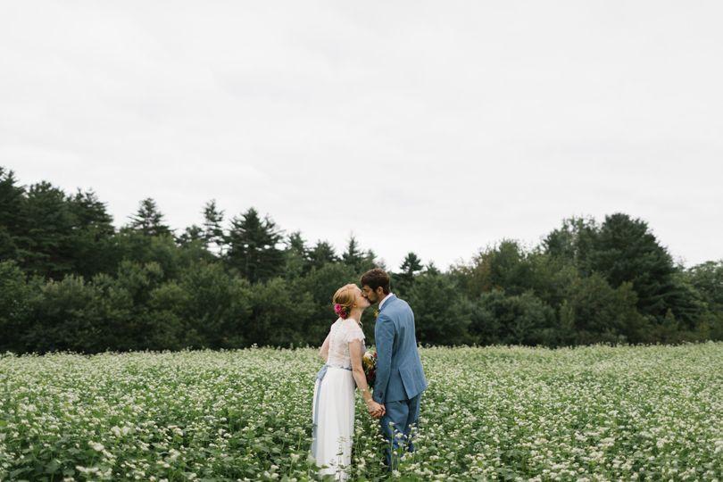 Buckwheat in bloom