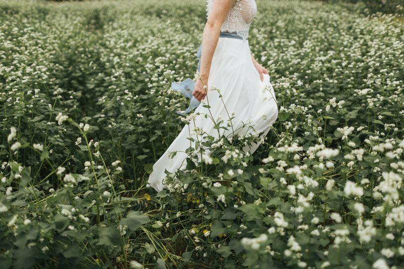 Buckwheat wandering