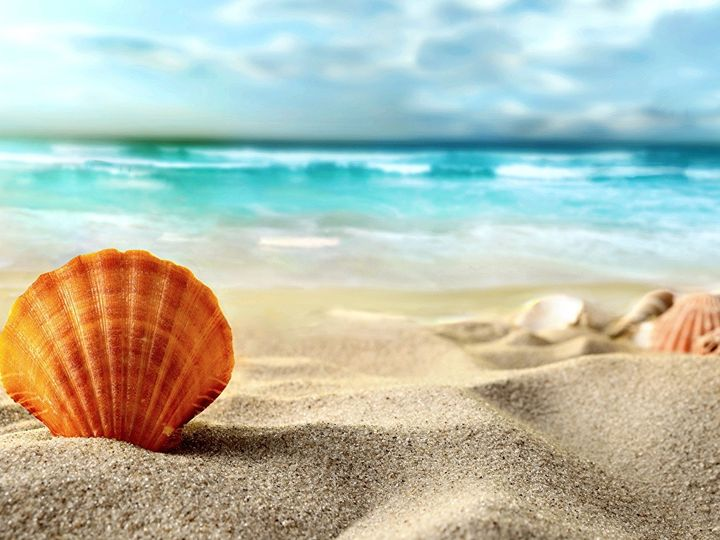 Tmx Sea Shells Sand Beach 502443 51 1274857 159381946462636 Dallas, TX wedding videography