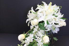 conroy's flower