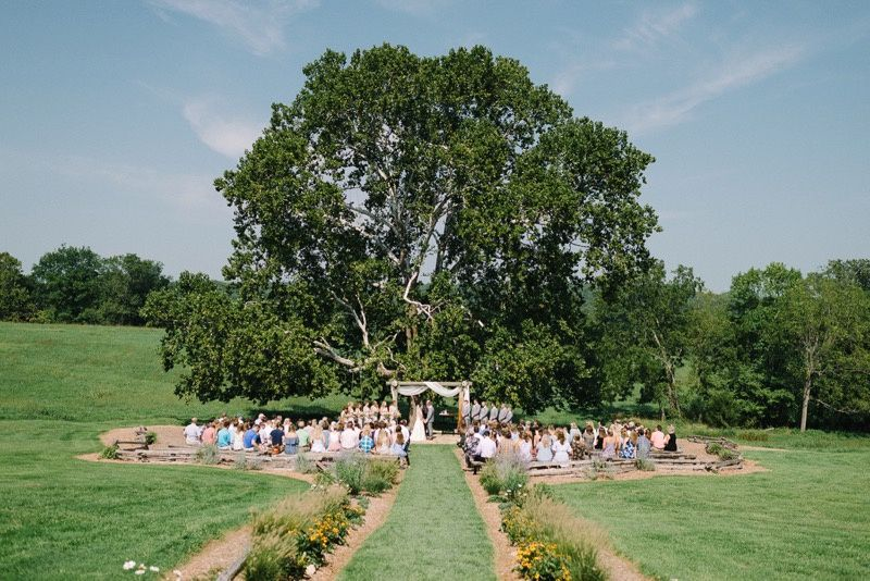 Sycamore Tree: The North Lens