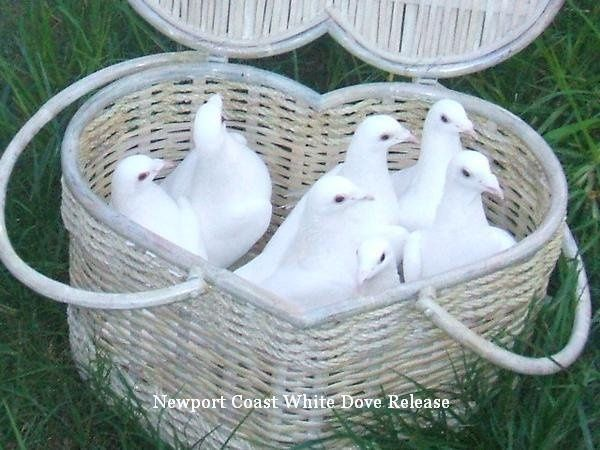 White Doves Los Angeles Southern California