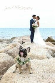 Tmx 1509987407637 Fbimg1473801351804resized Plymouth, MA wedding venue