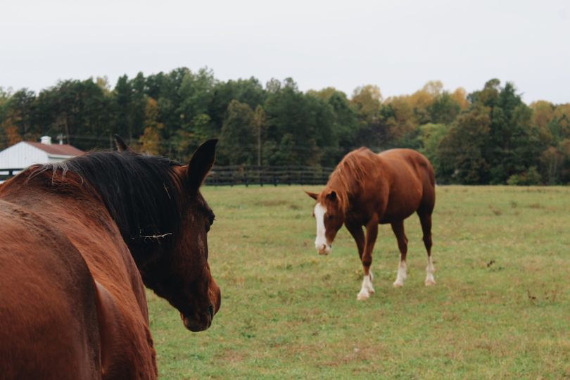 Horses on the farm!