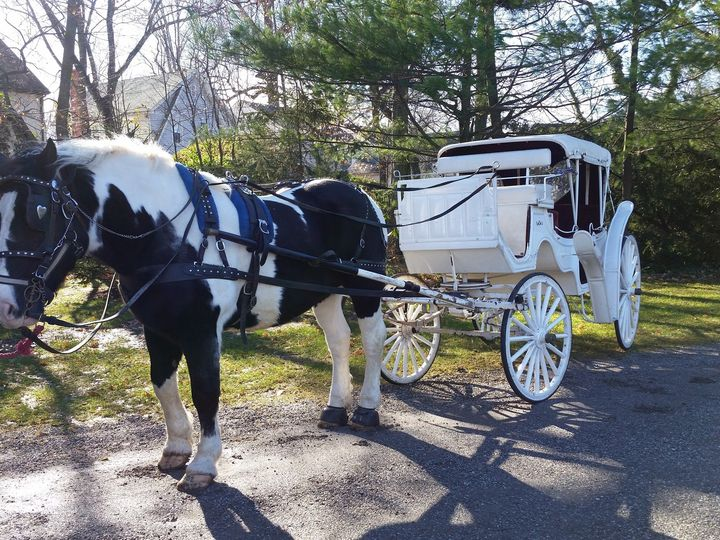 Tmx 1417976660430 Bx Vis With Paint Horse Jackson, NJ wedding transportation