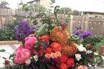 Angela Blossoms image