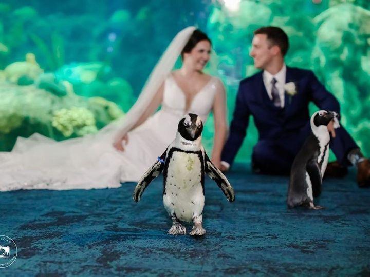 Tmx Aquarium 3 51 609867 158491089923120 Tampa, FL wedding planner