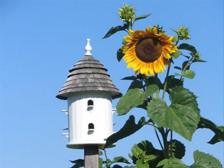 Tmx 1477246094239 Birdhouse In Sunflower Garden East Burke, VT wedding venue