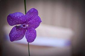 fioriamoreefantasia