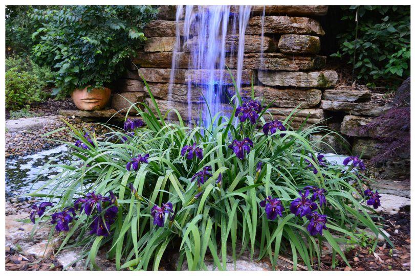 wild iris waterfall 51 413177