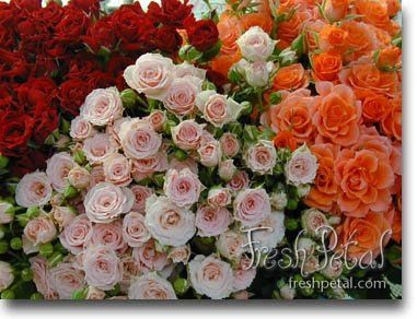 Our spray roses come in many different colors.