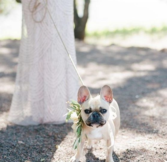 Bride and her French bulldog
