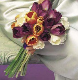 Tmx 1326927285728 Northparkk5 Buffalo, NY wedding florist