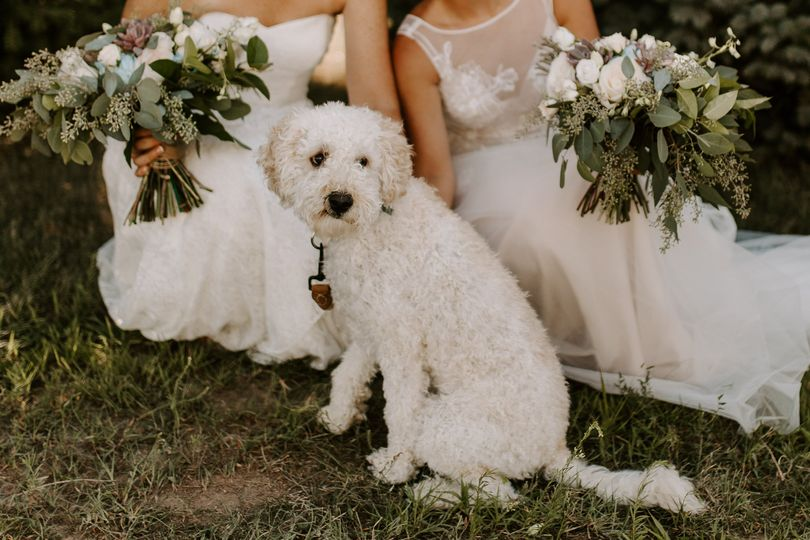 Brides with their dog - Anjali Nooka Photography