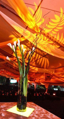 Tmx 1317654952408 Callatheendzone Tampa wedding florist