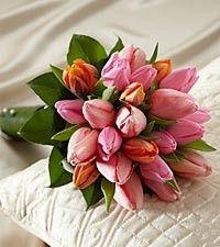tulip handheld